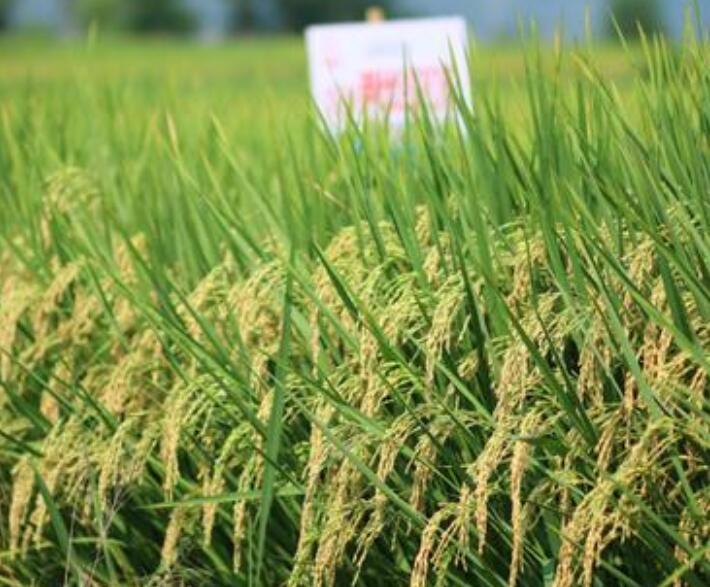四川瑞禾丰农业有限公司合作博优种子二维码系统