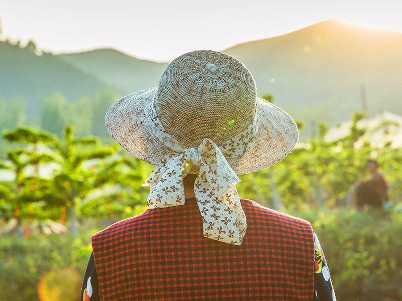 过完元宵离故乡,泪眼再看农村劳作的农民